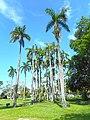 Sewell Park - Miami 04 Palm Trees.jpg