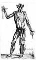 Sexta musculorum tabula, T. Geminus, 1545 Wellcome L0019053.jpg