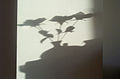 Shadow 2752.jpg