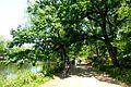 Shakujii Park - path - may 10 2015.jpg