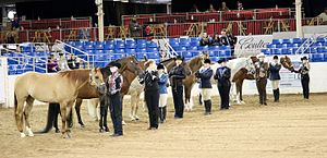 Horse showmanship - Adult competitors at the Scottsdale Arabian Horse Show