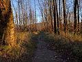 Side trail near the dike - panoramio.jpg