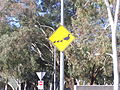 Silly watch out for duck sign in Australia.jpg