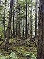 Sitka, Alaska (7708800160).jpg