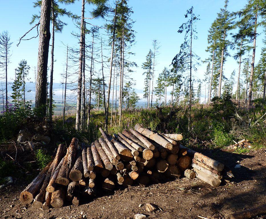 Produkcia dreva