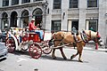 Sleigh ride in Old Montreal - panoramio.jpg