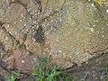 Slickensides at Ardmore fault plane - geograph.org.uk - 1358955.jpg
