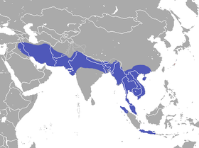 Small Asian Mongoose area.png