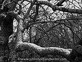 Snow Dust (32794118526).jpg