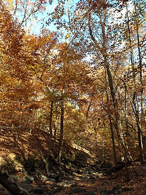 Forest Hills (Washington, D.C.) - Soapstone Valley, which is part of Rock Creek Park.