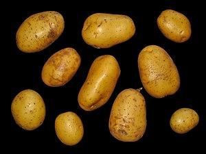English: Solanum tuberosum, Solanaceae, Potato...