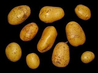 Zemiaky - nie sú plody, ale stonkové hľuzy
