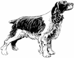 Spaniel 1 (PSF).png