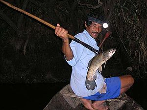 English: Night spear fishing , Amazon basin ,P...