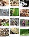 Spiders of Chinnar Wildlife Sanctuary 05.jpg