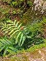 Srinlankan lizard.jpg
