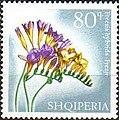 Stamp of Albania - 1967 - Colnect 136612 - Freesia Freesia hybrid.jpeg