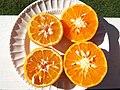Starr-131204-2677-Citrus reticulata-Clementine on left Honey on right-Hawea Pl Olinda-Maui (25110040722).jpg