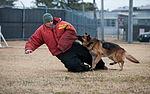 Stella, Bizallion, Guarding the Wolf Pack 140313-F-BS505-138.jpg