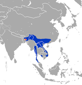 Stump-tailed Macaque area.png