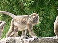Suisse zoo (21).jpg