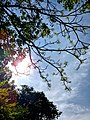 Sunshine leafs.jpg