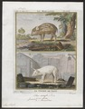 Sus scrofa domestica - 1700-1880 - Print - Iconographia Zoologica - Special Collections University of Amsterdam - UBA01 IZ21900111.tif