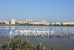 Texas A&M University–Corpus Christi
