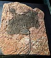 Tampere Mineral Museum - fossil.jpg