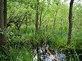 Teufelsbruch swamp next to crossing path in summer 11.jpg