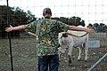 Texas Longhorn Steer (422314036).jpg