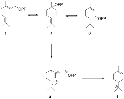 The conversion of GPP to alpha-terpinyl cation.