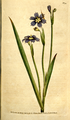 The Botanical Magazine, Plate 94 (Volume 3, 1790).png