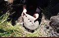 The Martinoli Stone (8577731866).jpg