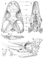 The Osteology of the Reptiles p68.png