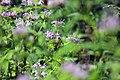Tiger Swallowtail Butterfly (35740826010).jpg