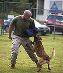 Training Unleashed, Marine dog handler shares bond with canine 131015-M-NP085-012.jpg