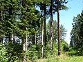 Trebic slavice hostanka stromy.jpg