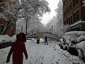 Tree falls due to weight of snow Boston Massachusetts March 2018.jpg