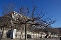 Tree in Paris 1.jpg