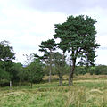 Trees and Rough Grazing east of Cellan, Ceredigion - geograph.org.uk - 566172.jpg