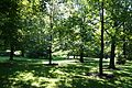 Trees at the Rideau Hall - panoramio.jpg