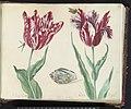 Twee tulpen met schelp, vlinder en vlieg Minerva Orrienthal (titel op object), RP-T-1950-266-37-2.jpg