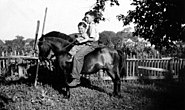 Two Farmboys on pony, 1937