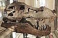 Tyrannosaurus rex (theropod dinosaur) (Hell Creek Formation, Upper Cretaceous; near Faith, South Dakota, USA) 6.jpg
