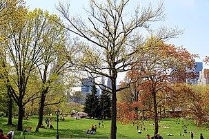 USA-NYC-Central Park1