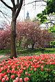 USA-NYC-City Hall Park1.jpg