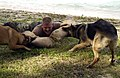 US Navy 050120-N-7293M-167 Master-at-Arms 3rd Class Bradley V. Frantz, acting as an aggressor during a training exercise, is taken down by Military Working Dogs (MWD) Brenda, left, and Brit.jpg