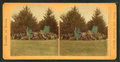 Unidentified garden with views of trees and exotic plants, by Seaver, C. (Charles).png