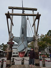 "A large replica of the film's shark hangs from a wooden frame. A sign next to it says ""Jaws"" and a man standing nearby is about a third of the height of the shark. A pulley and rope are used to pretend to hold the shark's mouth open."